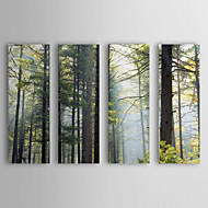 Stretched Canvas Art Landscape Shrouded Forest by Willow Way Studios, Inc. Set of 4