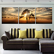 Stretched Canvas Print Art Landscape Tree in Sunset Set of 3