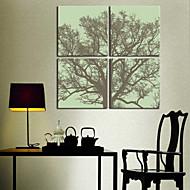 Stretched Canvas Print Art Botanical Old Tree Set of 4