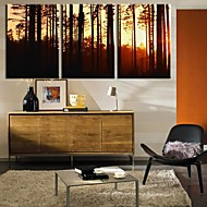 Stretched Canvas Art Landscape Twilight Woods Set om 3