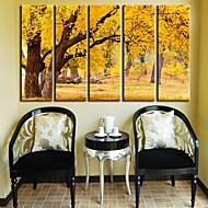 Stretched Canvas Art Landscape höstlig skog Set av 5