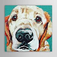 iarts®oil Malerei, Tiere, Haustiere Hund mit gestreckten Rahmen handbemalte Leinwand