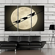 Stretched Canvas Art The Silhouette of The Birds in The Moonlight  Set of 3