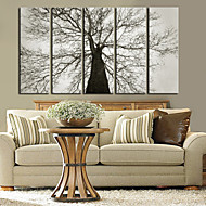 Protezala Canvas Art Botanički Stari Tree Set od 5