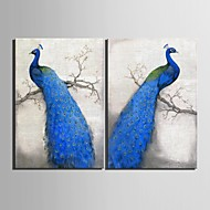Stretched Canvas Art Blue Peacock Decoration Painting Set of 2