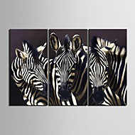E-HOME® Stretched Canvas Art Zebra Decoration Painting  Set of 3