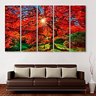 E-HOME® Stretched Canvas Art Maple Decoration Painting  Set of  5