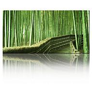 visuaalinen star®good laatu nykytaidetta venytetty kankaalle tulosteita realistinen Bamboo Forest tulostus