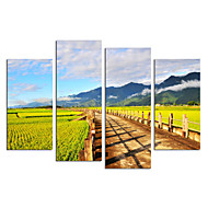 VISUAL STAR®Natural Field Stretched Canvas Print Countryside Picture Wall Art Ready to Hang