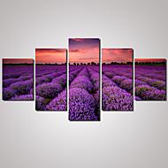 5 Panels  Purple Lavender Landscape  Picture Print on Canvas Unframed