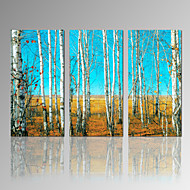 VISUAL STAR®Birch Tree Canvas Printing Art High Quality Forest 3 Panel Canvas Print for Home Decoration Ready to Hang