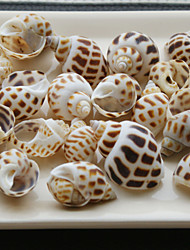 Wedding Décor Beach Themed Screw Shells - Set of 4 Packs (80 pieces/Pack)