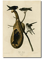 Printed Canvas Art Purple Martin by Vintage Apple Collection with Stretched Frame