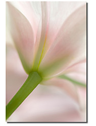 Printed Canvas Art Floral  Morning by Flowerphotos with Stretched Frame