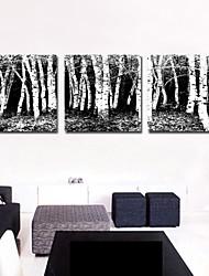 Stretched Canvas Art Landscape Botanical Trees Set of 3