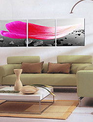 Stretched Canvas Art Landscape Seascape and Petal Set of 3