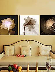 Reproduction transférée sur toile Art botanique Set de croissance de 3
