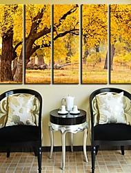 Toiles d'art Paysage d'automne Forêt Set de 5