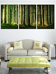 Натяжные холсте Пейзаж Зеленый лес Набор из 3