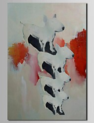 Hand Painted Oil Painting Animal 4 Little Dogs with Stretched Frame