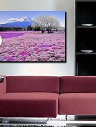 Stretched Canvas Print Art Landscape Flower Sea