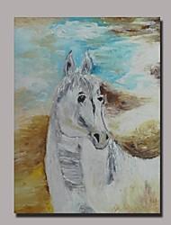 ручной росписью лошадь маслом с растянутыми кадр готов повесить