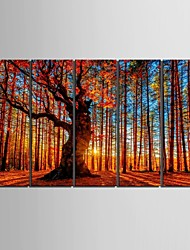 Stretched Canvas Art Red Wood  Decorative Painting  Set of 5