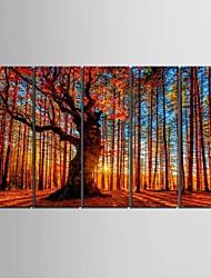 art de toile tendue bois rouge peinture décorative série de cinq