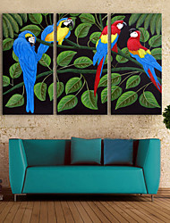 E-HOME® Stretched Canvas Art Color Parrot Decoration Painting  Set of 3