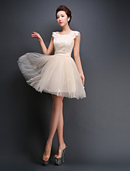 Short/Mini Tulle Bridesmaid Dress - Ruby / Champagne A-line Straps