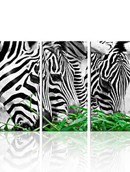 VISUAL STAR®Animal Zebra Stretched Canvas Printing For Home Decoration