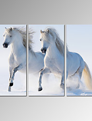 VISUAL STAR®Horse Picture Digital Canvas Print Home and Office Decor Wall Art Ready to Hang