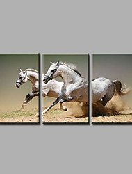Ready to Hang Stretched Museum Quality Hand-Painted Oil Painting Canvas Wall Art  Animals Running Horses Three Panels