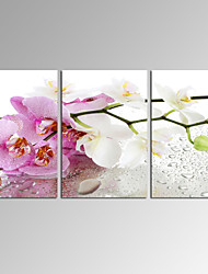 VISUAL STAR®Pink Orchid Flower Canvas Print Modern Home Decoration Wall Art Ready to Hang