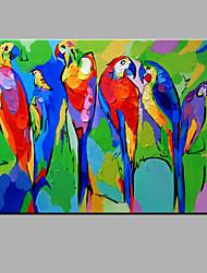 картина маслом современной абстрактной чисто ручной рисовать готовы повесить декоративную картину маслом попугай