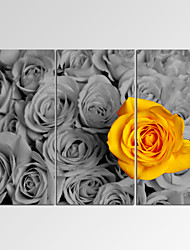 VISUAL STAR®Framed Wall Art for Home Decoration Yellow Rose among Black Giclee Print on Canvas Ready to Hang