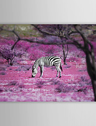 Animal Freedom Zebra by Ben Heine Canvas Print From Ready to Hang 7 Wall Arts®