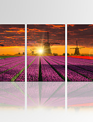 VISUAL STAR®Lavender Garden Sunrise Wall Art for Home Decor Landscape Giclee Print on Canvas Ready to Hang