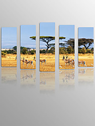 Grassland Lucky Tree on Canvas wood Framed 5 Panels Ready to hang for Living Decor