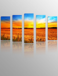 Sundown over Wheat on Canvas wood Framed 5 Panels Ready to hang for Living Decor