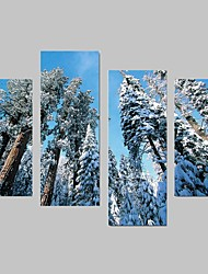 Landscape / Botanical Cedar Canvas Print Four Panels Ready to Hang,Any Shape(No Frame)
