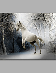 Stretched Canvas Print / Unframed Canvas Print Animal White Horse in Snow ModernOne Panel Horizontal Print Wall Decor For Home Decoration
