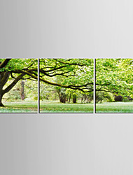 Canvas Set Landscape Floral/Botanical Modern Pastoral,Three Panels Canvas Vertical Print Wall Decor For Home Decoration