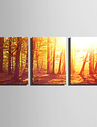 E-HOME® The Woods At Dusk Clock in  Canvas 3pcs