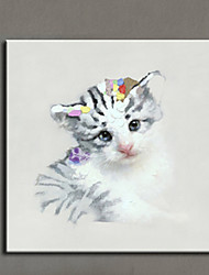 Lovely Animal Cat Oil Painting Hand Painted Canvas Animal Painting Cat Home Decor Picture Wall Art Artwork Canvas Photo Ready Made Frame