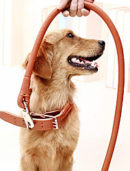 Dog Dog Rope