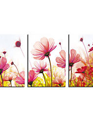 Stretched Canvas Prints Pink Flowers Printed on Canvas Modern Art for Home Decoration