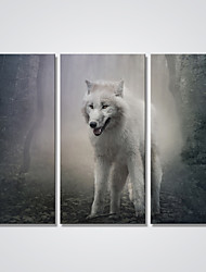 Canvas Print A Wolf in the Forest Animal Wall Art for Decoration Ready to Hang 30x60cmx3pcs
