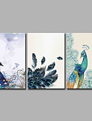 Peacock Meets by Chance 3 Panels Hand-painted Oil Paintings on Canvas Modern Artwork Wall Art for Room Decoration 20x28inchx3