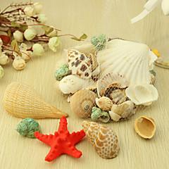 Wedding Décor Nice Ocean Shell  Decoration